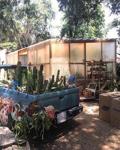Cactus, Altadena