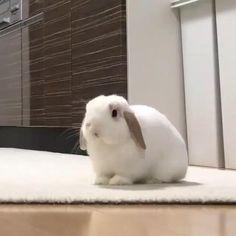 Cute Baby Bunnies, Baby Animals Super Cute, Cute Little Animals, Cute Funny Animals, Cute Cats, White Bunnies, Funny Bunny Videos, Funny Animal Videos, Pet Bunny Rabbits