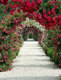 """roses, arches, roses, arches..... Das Frontbild auf dem """"Sterbebildchen"""" meiner Stiefmutter ... der Rosenweg für die Rosenliebhaberin."""