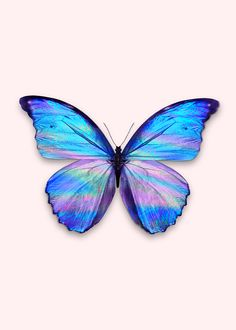 Butterfly Effect, Blue Butterfly, Butterfly Wings, Site Logo, Butterfly Wallpaper Iphone, Images Esthétiques, Apple Watch Wallpaper, Blue Morpho, Butterfly Pictures