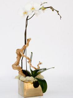 orchid arrangements - orchids + plants   Custom & Imported Furniture. Home Decor. Accessories. Landscape Design. Orchid Club.