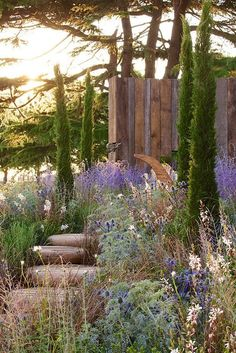 Cypress trees standing upright and tall - Gardening Garden Trees, Garden Paths, Garden Landscaping, Garden Bridge, Mediterranean Garden Design, Flora Und Fauna, Cypress Trees, Side Garden, Vegetable Garden Design