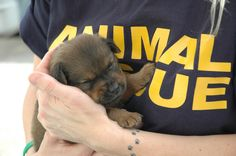 Image from http://www.filmmovement.com/downloads/photos/Animal%20Rescue.jpg.