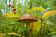 a quieter storm: Photo Fairy Dust, Fairy Land, Fairy Tales, Turtle Book, Quiet Storm, Mushroom Hunting, Woodland Fairy, Garden Of Eden, Wonders Of The World