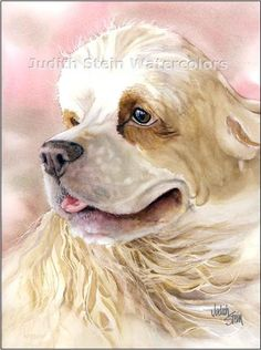 COCKER SPANIEL American Dog 11x15 Giclee Watercolor by k9stein