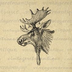 Moose Graphic Printable Download Moose Head Antlers Image Illustration Digital Vintage Clip Art. Printable digital graphic. This high quality digital artwork is high resolution for fabric transfers, making prints, and more great uses. For personal or commercial use. This digital image is high quality at 8½ x 11 inches large. Transparent background version included with every digital image.