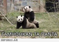 Mood of the day. Funny Greek Quotes, Greek Memes, Funny Quotes, Funny Memes, Jokes, Funny Statuses, Sarcastic Humor, Man Humor, Panda Bear