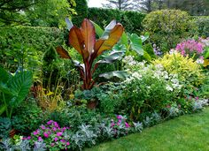 The giant leaves of a red banana plant add a touch of the jungle to the sun garden. See more of this garden gone berserk at gardendesign.com #gardendesign #bananaplant #sungarden #gardeninspiration #gardening