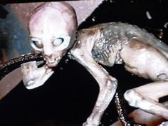 Photos and info on the The Peruvian And Mexican Alien bodies.