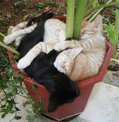 18доказательств того, что коты— это растения