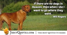 """""""If there are no dogs in Heaven, then when I die I want to go where they went."""" – Will Rogers Afterlife Quotes, Daily Quotes, Best Quotes, Paradise Quotes, Dog Heaven Quotes, When I Die, Jokes Quotes, Quotes About God, Be Yourself Quotes"""