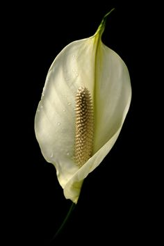 1000+ images about Blooming Potted Plants on Pinterest ...
