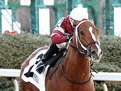 April 7, 2014 - Tapiture & Conquest Titan Work for Arkansas Derby