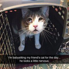 Poor Little Kitty
