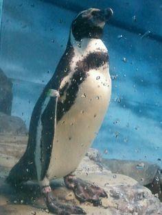 Shinn Enoshima aquarium