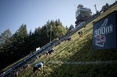 Redbull 400 Meter 45% gradient race- Salomon
