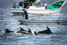 127 Million Reasons Why the Cove Dolphin Slaughter Continues | TakePart