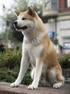 Hachi A Dogs Tale Trailer Photo Gallery Cute Puppies Dogs And Puppies Pet