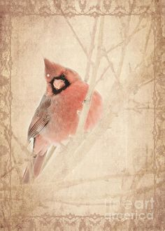 Cardinal Prints available, by Pam Holdsworth