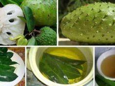 Como debes hacer el té de hojas de guanábana para combatir las células del cáncer