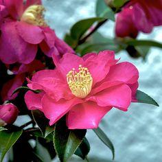 Winter Flowers | by shinichiro*