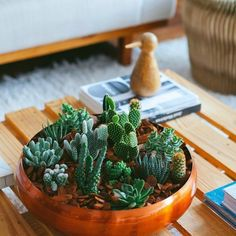 Learn how to make an amazing centerpiece for your coffee table using mini cactus and succulents.(in Portuguese)