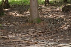 Google Image Result for http://riveredge.us/UserFiles/image/Art%2520in%2520Nature/branch-art-in-nature.jpg