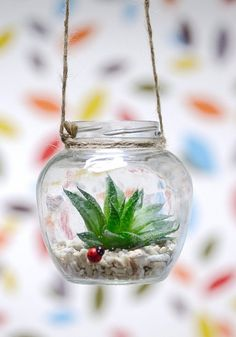 Live Succulent Terrarium   in Hanging Glass by DingaDingUK on Etsy, £8.99