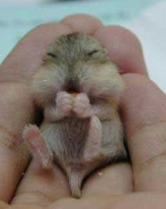 Cute baby animals together. Cute baby animals together. Cute baby animals playing together. Cute Baby Animals, Animals And Pets, Funny Animals, Animal Babies, Small Animals, Animals Images, Rock Animals, Funny Babies, Cute Babies
