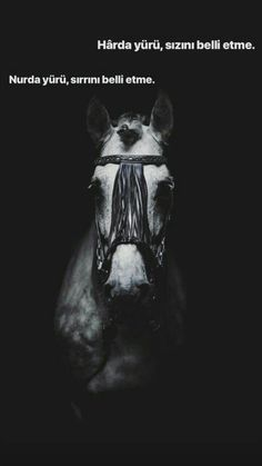 King Horse, Proverbs Quotes, Allah Islam, Sufi, Love Quotes For Him, Galaxy Wallpaper, Islamic Quotes, Collage Art, Cool Words