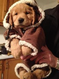 Pinner wrote: Keep the baby warm... and looking like an Ewok.