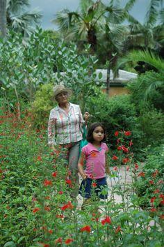 Butterfly in Fairchild's Butterfly Garden
