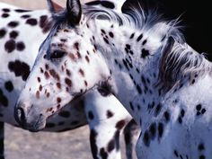 Beautiful Horses Wallpaper | Horse Wallpapers|HD Horses Wallpapers