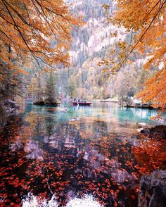 "opticcultvre: "" sennarelax ~ Blausee - Switzerland """