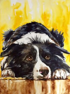 Watercolor on paper, 27x35 cm. Border Collie.
