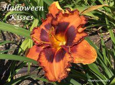 Halloween Kisses photo by HappyGoDaylily