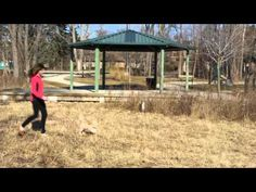 """""""A Day in the Park with Nellie"""" www.chicagopetvideo.com #puppy #dogs #pets"""