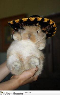 Viva La Bunny #Cute