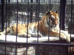 Once upon a Time a Zoo - C'era una volta uno Zoo - Torino 1980