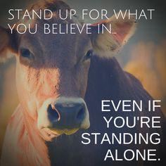 Human Freedom Animal Rights One Struggle One Fight — pandacake: blackheartswillsing: my vegan art
