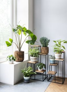 Idea Of Making Plant Pots At Home // Flower Pots From Cement Marbles // Home Decoration Ideas – Top Soop Indoor Garden, Indoor Plants, Home And Garden, Decoration Plante, Small Home Offices, House Plants Decor, Office Plants, Plant Shelves, Plant Design