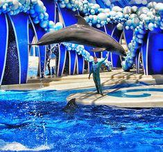 Seaworld in Orlando, Florida.