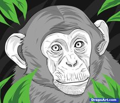 how to draw a realistic monkey step 6 | Monkey drawing, 3d ...
