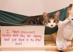 The Best of Cat Shaming - Bora Paris