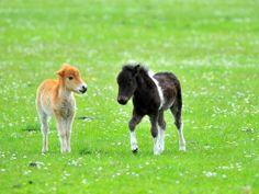 Foto wallpaper horses