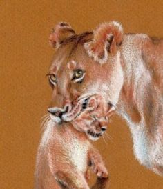 Colored Pencil Techniques from Master Artists Realistic Pencil Drawings, Pencil Drawing Tutorials, Amazing Drawings, Cool Drawings, Charcoal Drawings, Painting Fur, Feather Painting, Animal Paintings, Animal Drawings