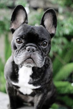 I love my new lens... and my frenchie!