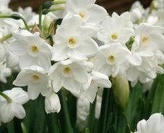 plant daffodils this fall for a drought tolerant display next spring.