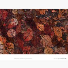 Textile Art Inspired by Nature Textile Fiber Art, Textile Artists, Fibre Art, Cas Holmes, Textiles Techniques, Sewing Art, Natural World, Beautiful Images, Machine Embroidery