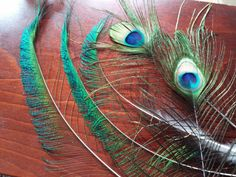 Peacock Feathers 2 All Seeing Eyes and 3 by CherylsGoodStuff